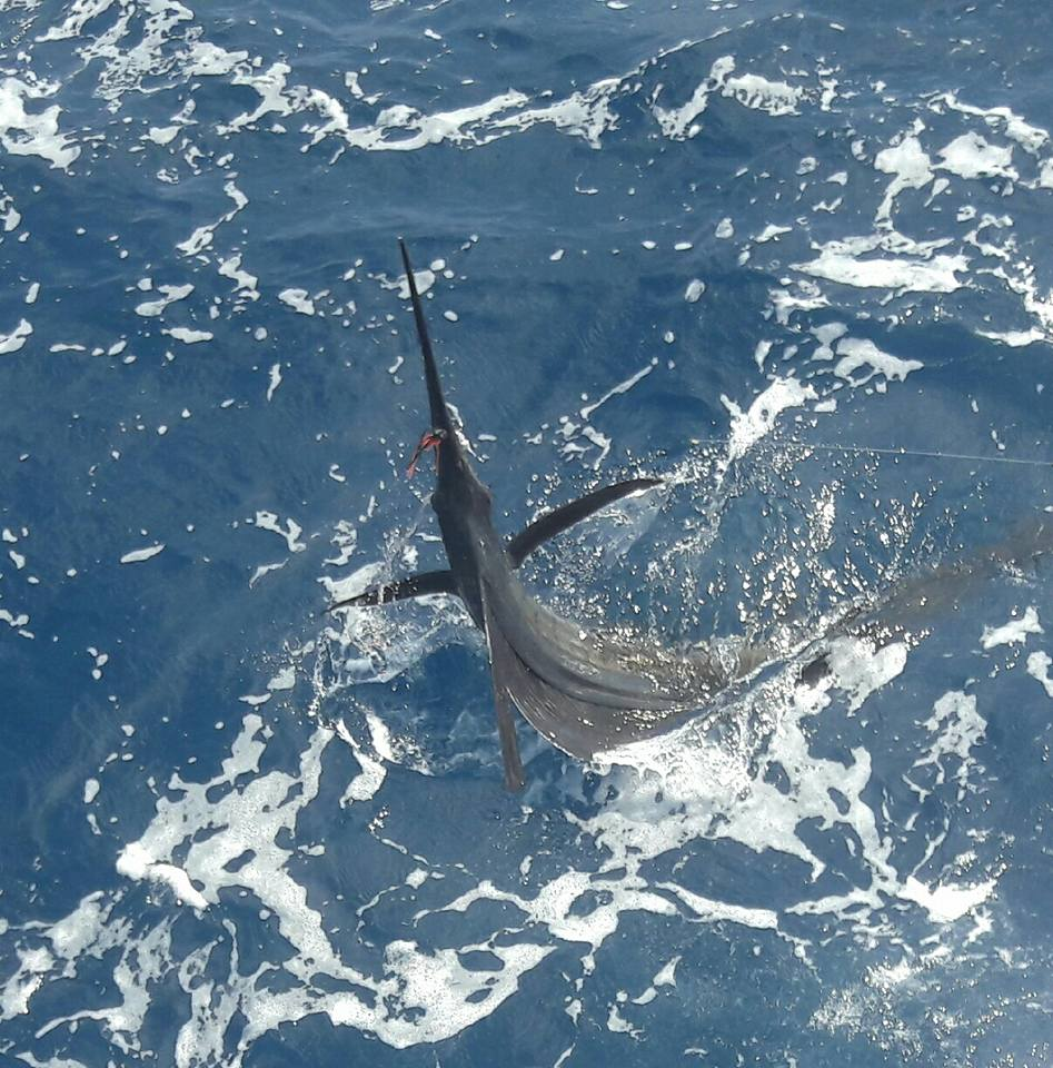 Sailfish Catch
