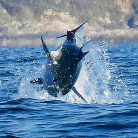 Campaign for a UK Recreational Live Release Bluefin Tuna Fishery