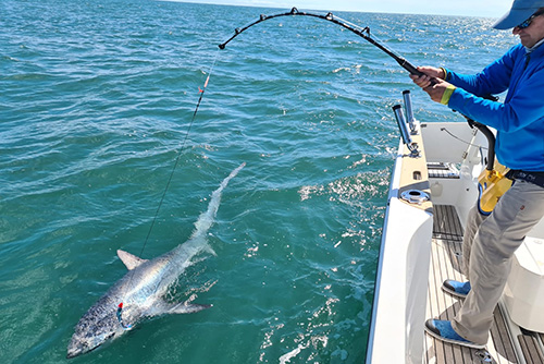 Thresher Shark Fishing Rods and Reels