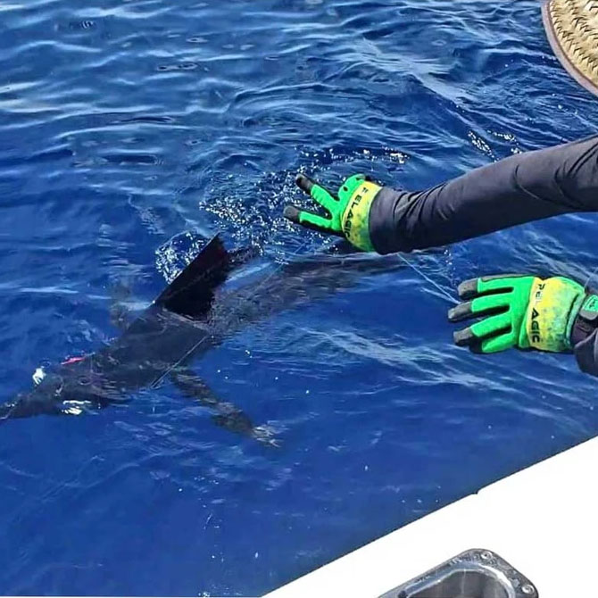 Pelagic End Game Pro Fishing Gloves